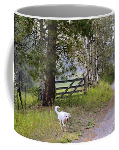 Akbash Coffee Mug featuring the photograph Morning Walk1 by Roland Stanke