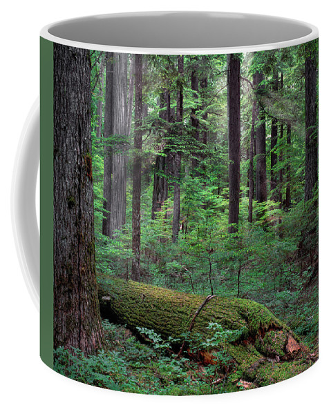 Idaho Scenics Coffee Mug featuring the photograph Old Growth Forest by Leland D Howard