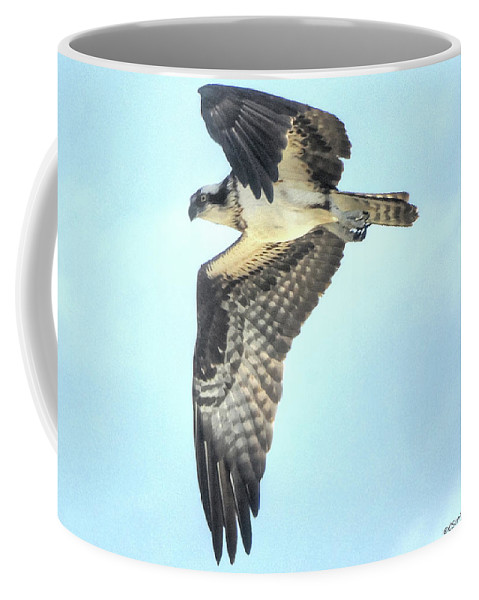 Osprey Coffee Mug featuring the photograph Osprey by Charlotte Schafer