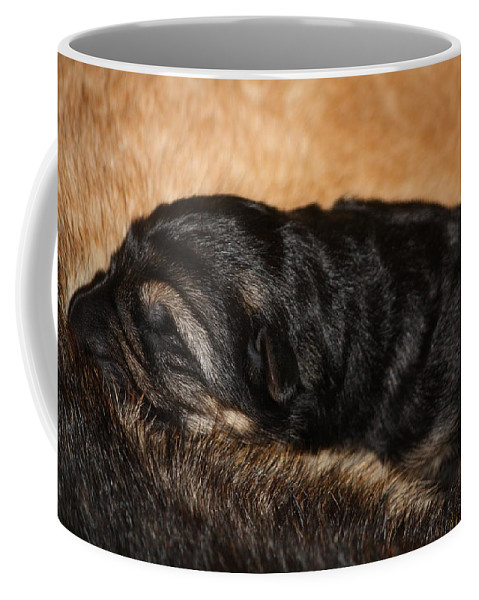 German Shepherd Coffee Mug featuring the photograph Our Singleton by Cheryl Orduno