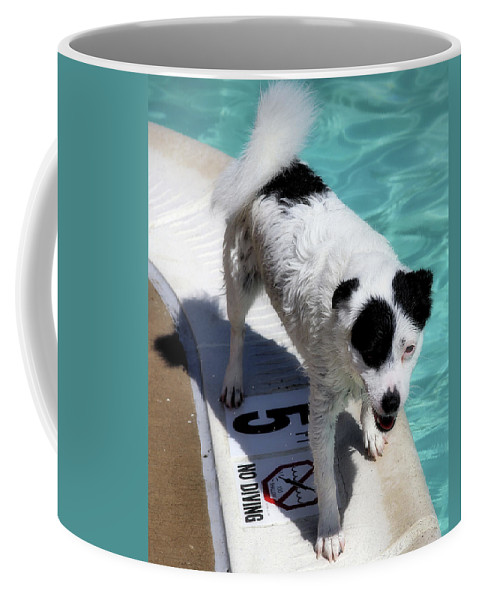 Jack Russell Coffee Mug featuring the photograph Pool Director Too by Robert McCubbin