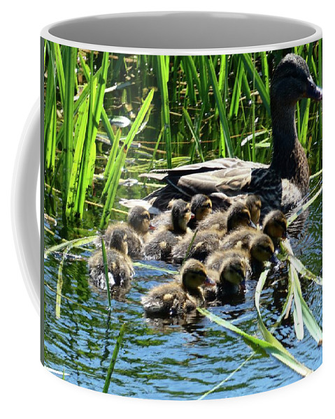Ducklins Coffee Mug featuring the photograph Proud Mother Duck by Ingrid Huetten