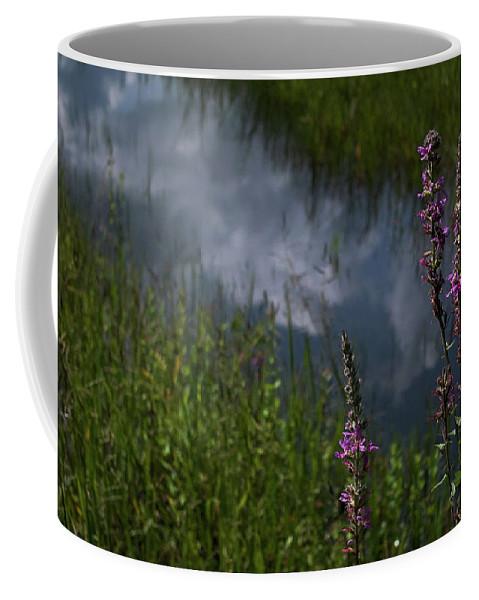 Purple Loosestrife Coffee Mug featuring the photograph Purple Daydream by Jerry LoFaro