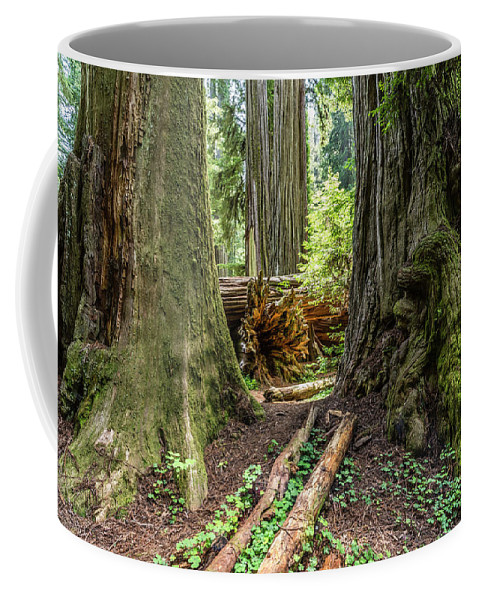 Redwood Coffee Mug featuring the photograph Redwoods by David Kulp