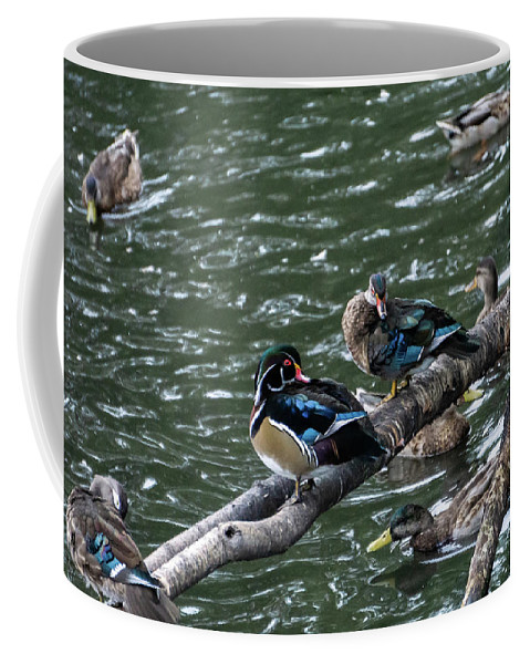 Duck Coffee Mug featuring the photograph Resting Ducks by Rob Olivo
