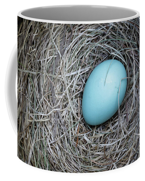 Bird Coffee Mug featuring the photograph Robin's Egg by Edward Fielding