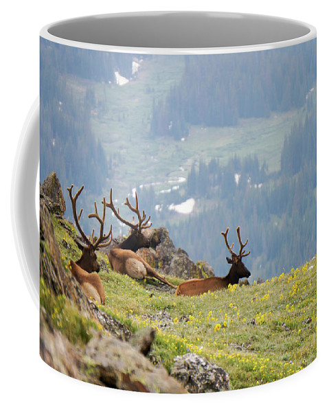 Rocky Coffee Mug featuring the photograph Rocky Mountain Elk 1 by Richard A Brown