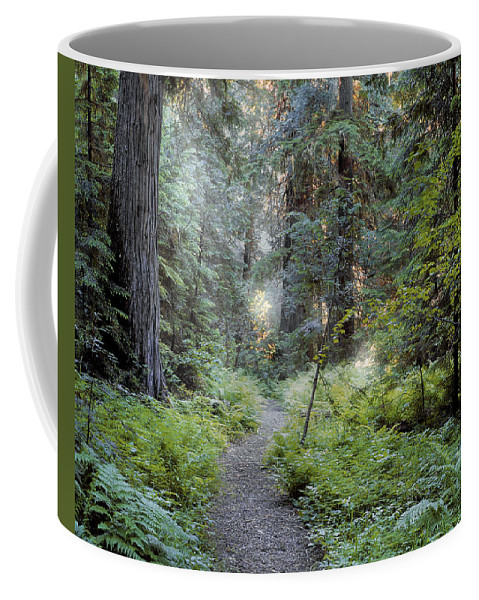 Roosevelt Grove Coffee Mug featuring the photograph Roosevelt Grove by Leland D Howard