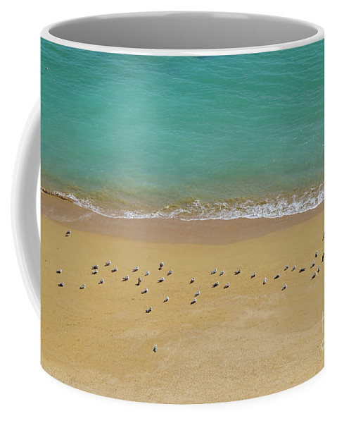 Deserta Coffee Mug featuring the photograph Seagulls Relaxing In Deserta Beach by Angelo DeVal