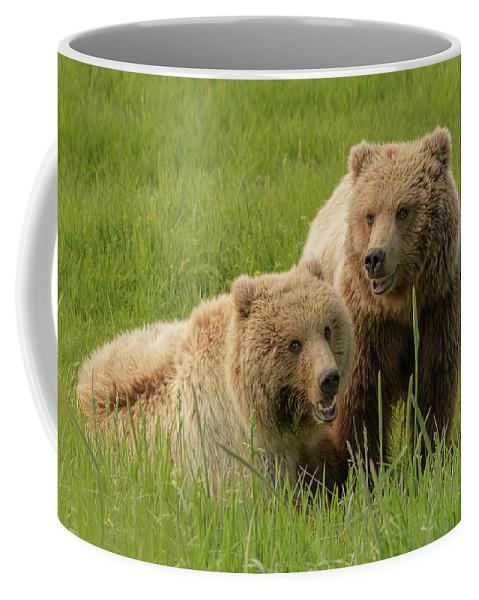 Alaska Coffee Mug featuring the photograph Siblings by Chad Dutson