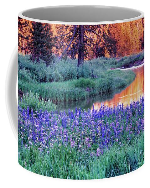 Idaho Scenics Coffee Mug featuring the photograph Silvery Lupine by Leland D Howard