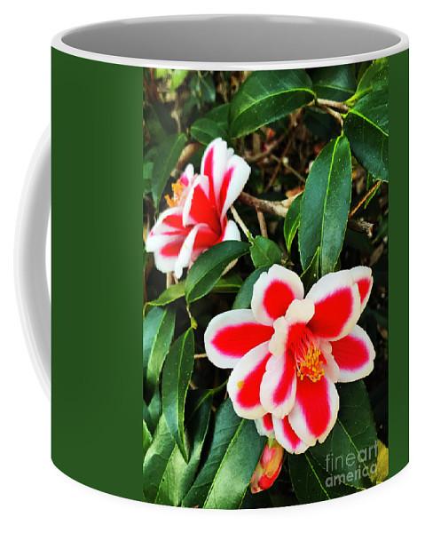 Flower Coffee Mug featuring the photograph Tama Peacock Twins by Rick Locke