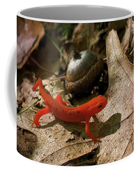 Acorn Coffee Mug featuring the photograph The Efts Progress by Jerry LoFaro
