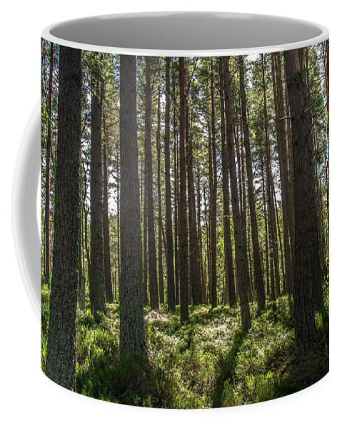 Trees Coffee Mug featuring the photograph Through The Trees by Paul Roberts