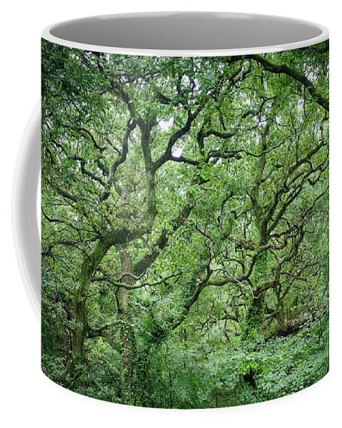 Broadstone England Coffee Mug featuring the photograph Twisted Forest Full Color by Nathan Bush