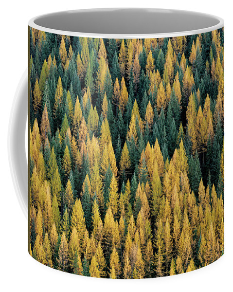 Idaho Scenics Coffee Mug featuring the photograph Western Larch Forest by Leland D Howard