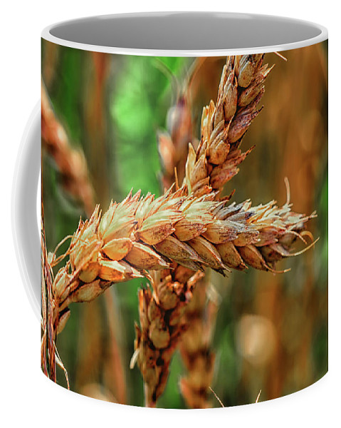 Harvest Coffee Mug featuring the photograph Wheat by Peter Moderdovsky