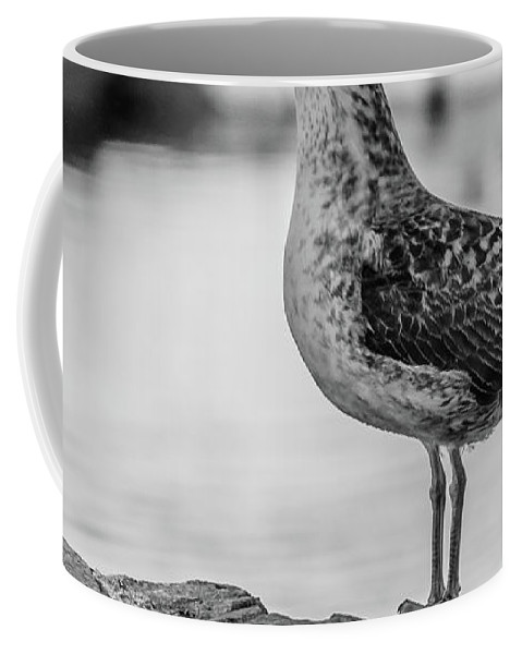 Seagull Coffee Mug featuring the photograph Young Seagull by Borja Robles