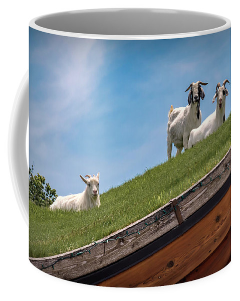 Animal Coffee Mug featuring the photograph 20-0608-0100 by Anthony Roma