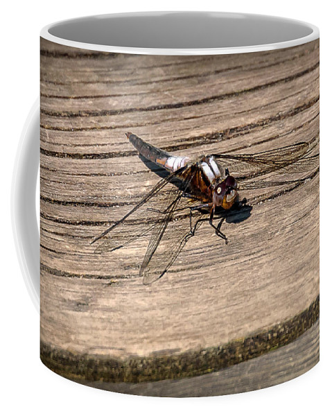 Insects Coffee Mug featuring the photograph 20-0609-0227 by Anthony Roma