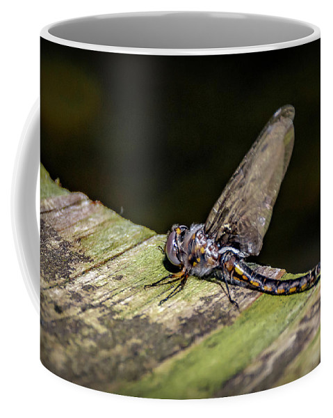 Insects Coffee Mug featuring the photograph 20-0609-0236 by Anthony Roma