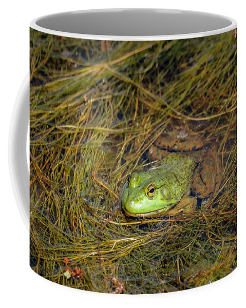 Animal Coffee Mug featuring the photograph 20-0616-0534 by Anthony Roma