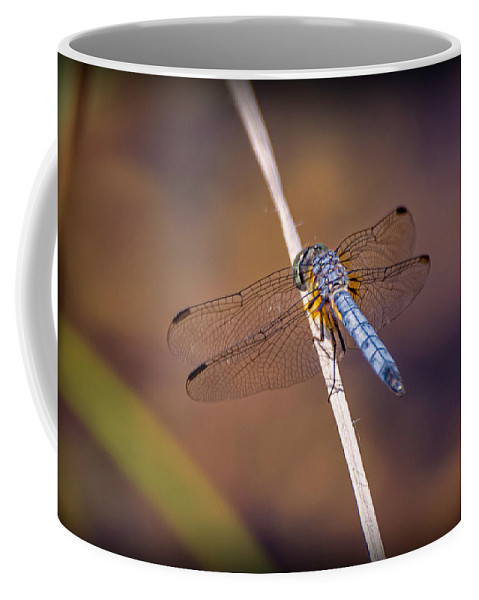 Insects Coffee Mug featuring the photograph 20-0616-0568 by Anthony Roma