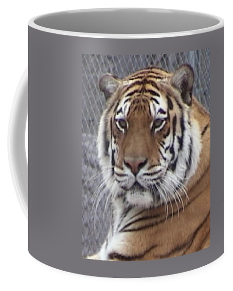 Panthera Coffee Mug featuring the photograph Alexis by Barbara Keith