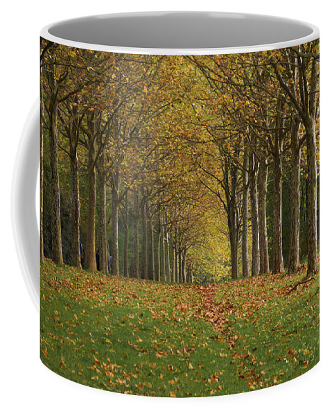 Trees Coffee Mug featuring the photograph Autumn Alignment by Michael Briley
