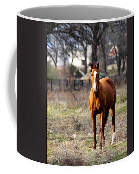 Horse Coffee Mug featuring the photograph Bay Horse 3 by C Winslow Shafer