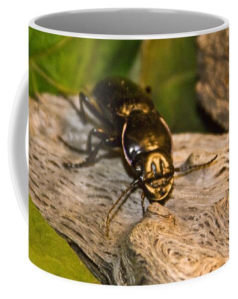 Beetle Coffee Mug featuring the photograph Black Beetle at Sunrise by Douglas Barnett