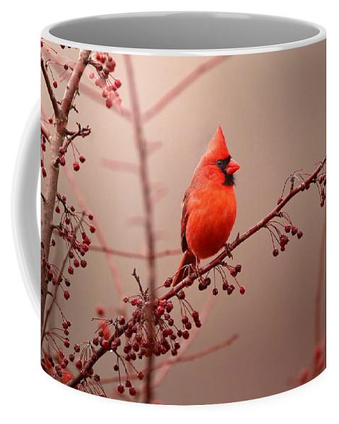 Cardinal Coffee Mug featuring the photograph Bold Beauty by Rob Blair