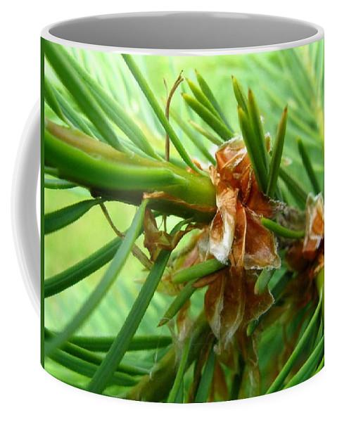 Tree Coffee Mug featuring the photograph Branch of Pine by Rhonda Barrett