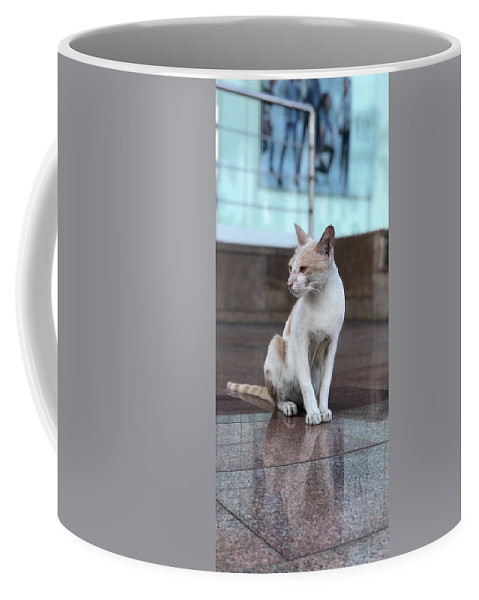 Wallpaper Coffee Mug featuring the photograph Cat Sitting On Marble Floor by Prashant Dalal