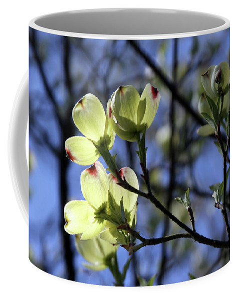 Dogwood Tree Coffee Mug featuring the photograph Dogwood in Sunlight by John Lautermilch