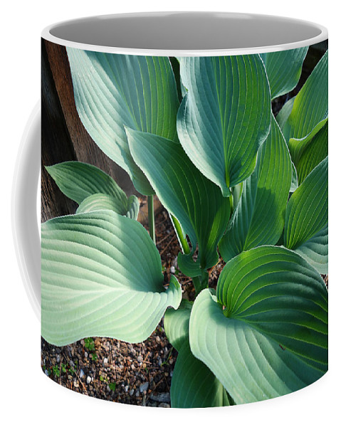 Hosters Coffee Mug featuring the painting Green leaves by Charles Stuart