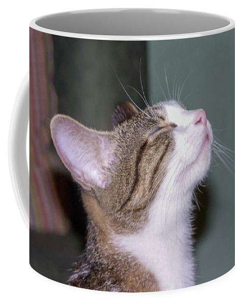 Cat Coffee Mug featuring the photograph How Sweet It Is by C Winslow Shafer