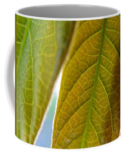 Leaves Coffee Mug featuring the photograph Interesting Leaves by Rhonda Barrett