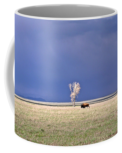 Lone Coffee Mug featuring the photograph Lone Buffalo After Storm by Douglas Barnett