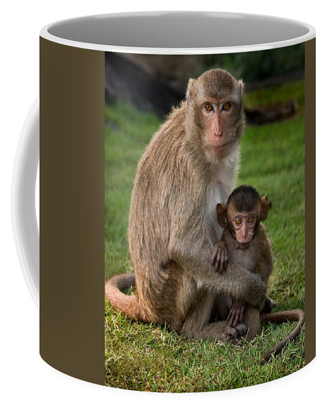 3scape Coffee Mug featuring the photograph Macaque Monkey Family by Adam Romanowicz