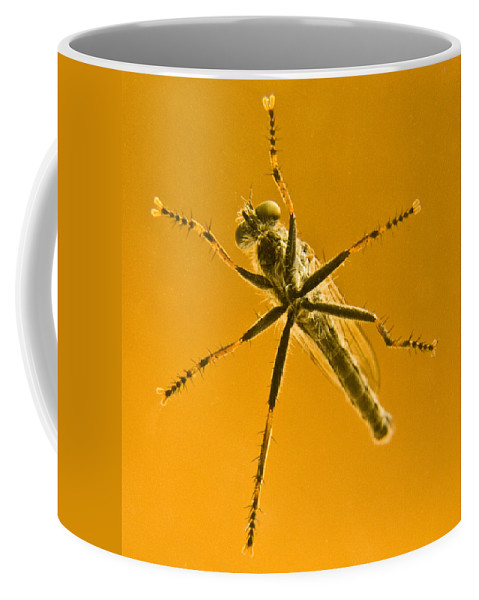 Robber Coffee Mug featuring the photograph Robber Fly by Douglas Barnett