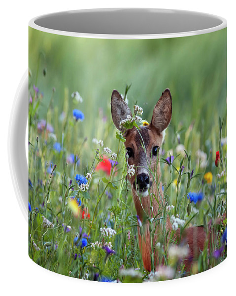 00540443 Coffee Mug featuring the photograph Roe Deer Amid Wildflowers by Ronald Stiefelhagen