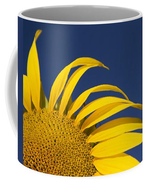 3scape Coffee Mug featuring the photograph Sunflower by Adam Romanowicz