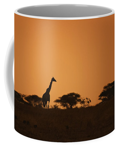 3scape Coffee Mug featuring the photograph Sunset Over Tarangire by Adam Romanowicz