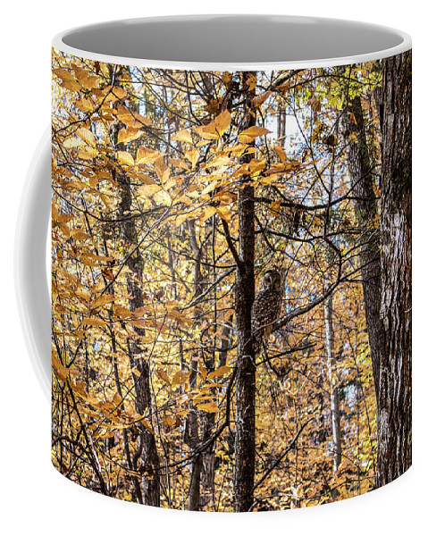 Coffee Mug featuring the photograph The hidden gem by Francis Lavigne-Theriault