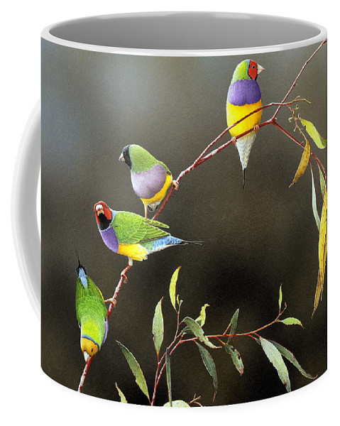 Bird Coffee Mug featuring the painting Three Guys for Every Girl - Gouldian Finches by Frances McMahon