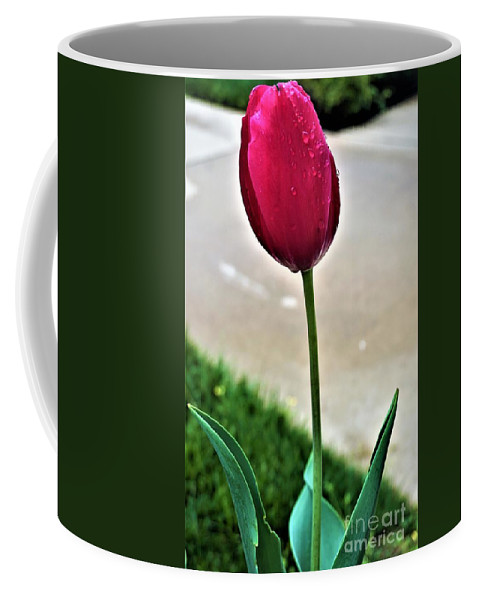 Tulip Coffee Mug featuring the photograph Tulip by Jimmy Clark
