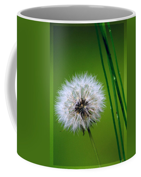 Dandelion Coffee Mug featuring the photograph Waiting for the Winds of Deliverance by Holly Kempe