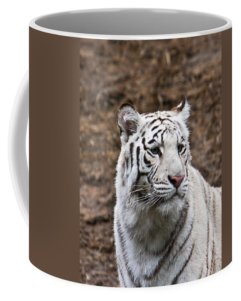 Bengal Coffee Mug featuring the photograph White Tiger Portrait by Douglas Barnett