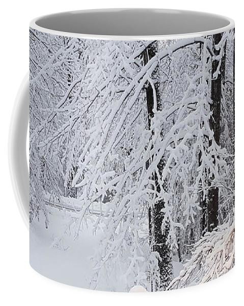 Winter Coffee Mug featuring the photograph Winter by Trevor Slauenwhite